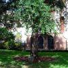 GEORGE WASHINGTON MEMORIAL TREE CHARLESTON